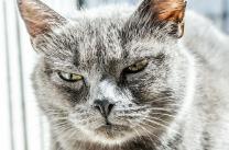 Katzenbilder (Foto: pixabay.com)